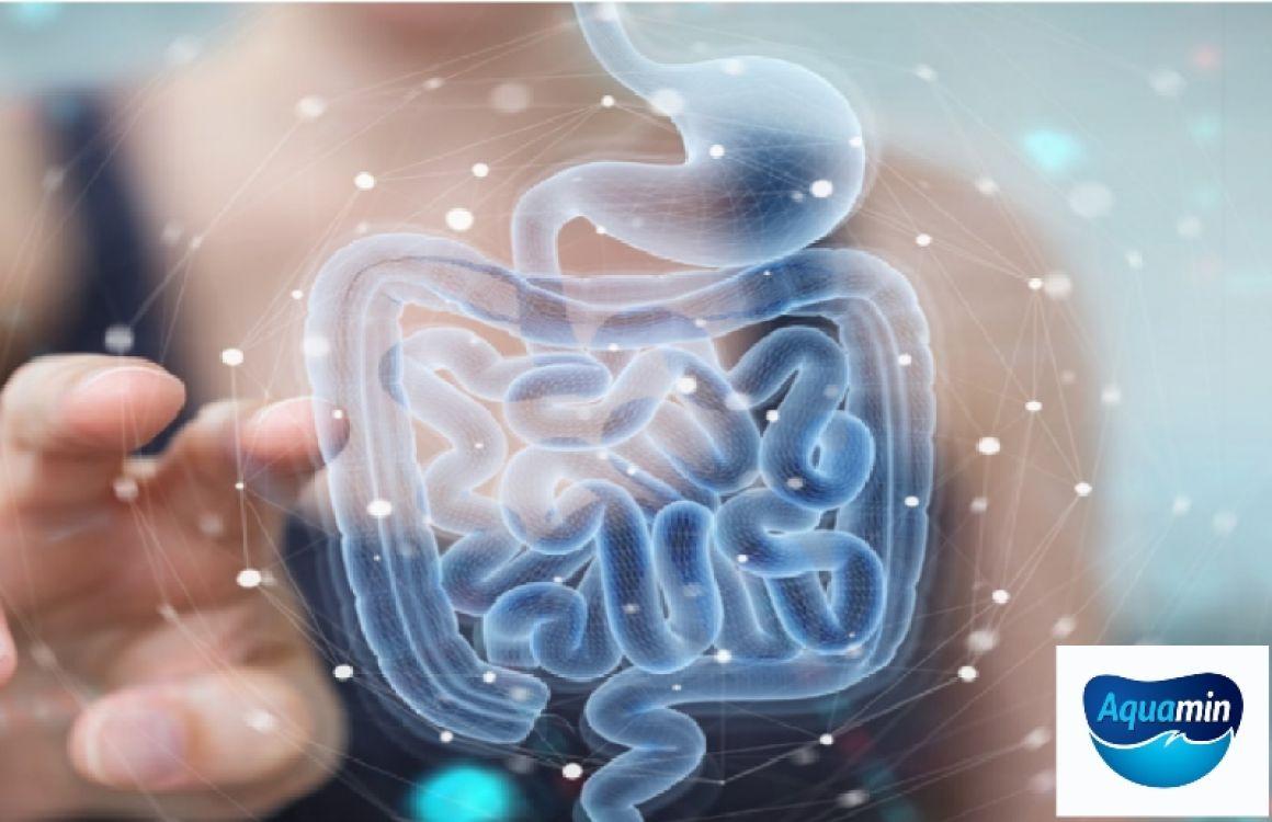 gut-health-article-1.jpg